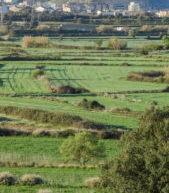 El Gobierno de Aragón aprueba agilizar los proyectos de energías renovables